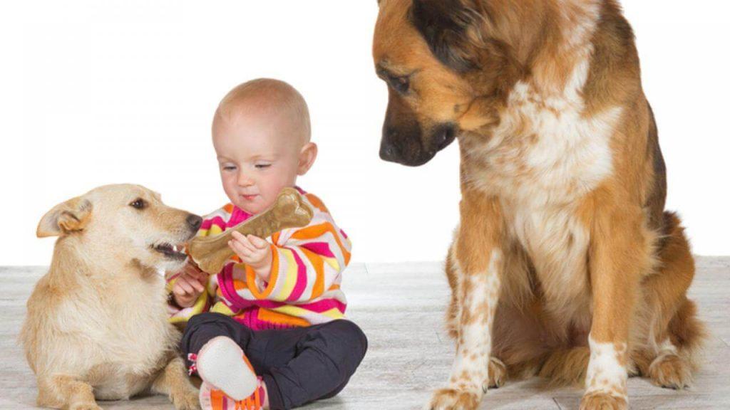 Os animais sentem ciúmes? estudos recentes confirmam que sim!