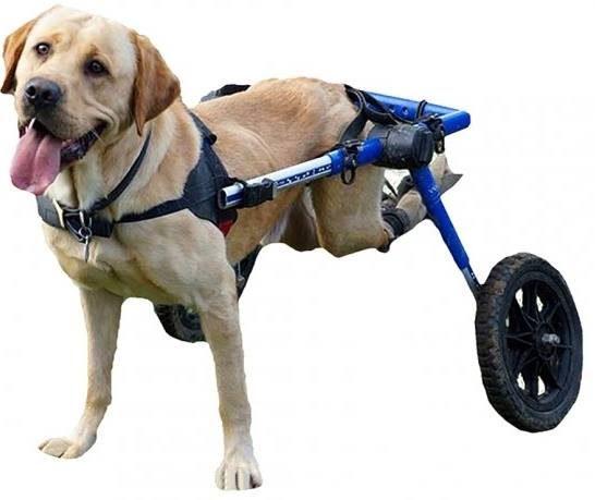 walking-wheels-9103137-9244385