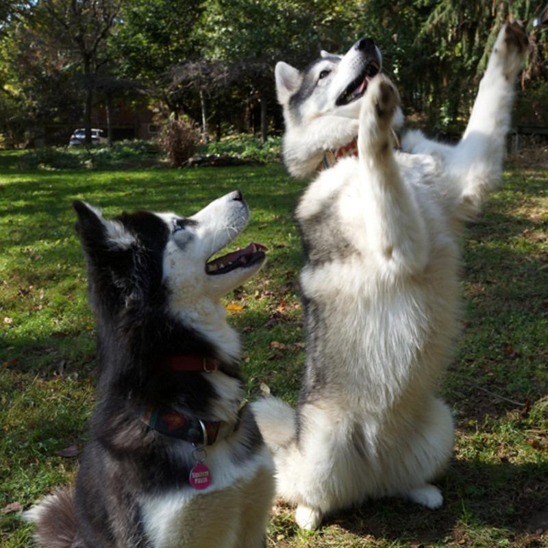 Como adestrar um cachorro