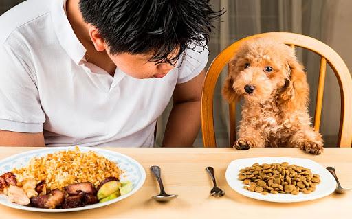 O que fazer quando o cachorro não quer comer