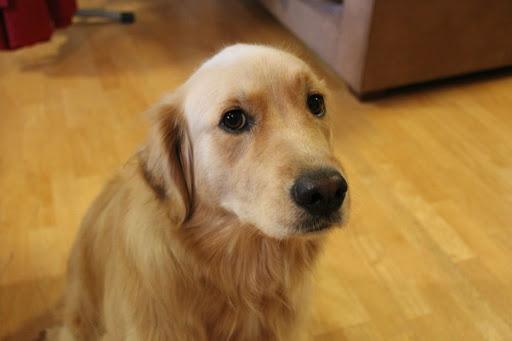 O que passar no chão para o cachorro não urinar