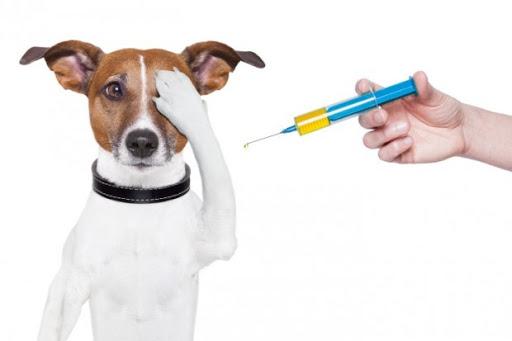 Como aplicar injeção em cachorro