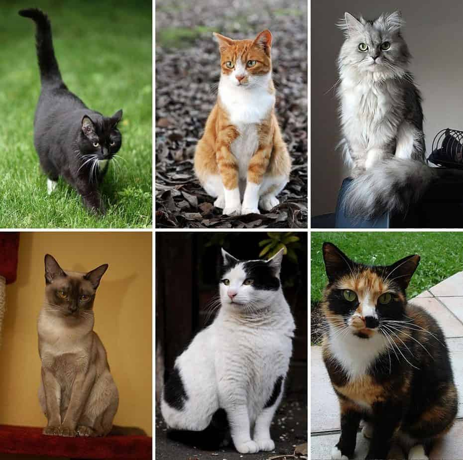 1200px-collage_of_six_cats-02-6858621-4164057