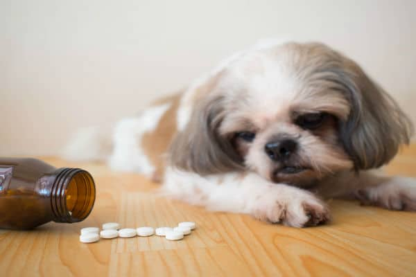 Quanto tempo o remédio de verme faz efeito no cachorro