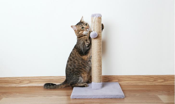 melhor-arranhador-para-gato-photo725297363-44-30-30-1605294-5486639