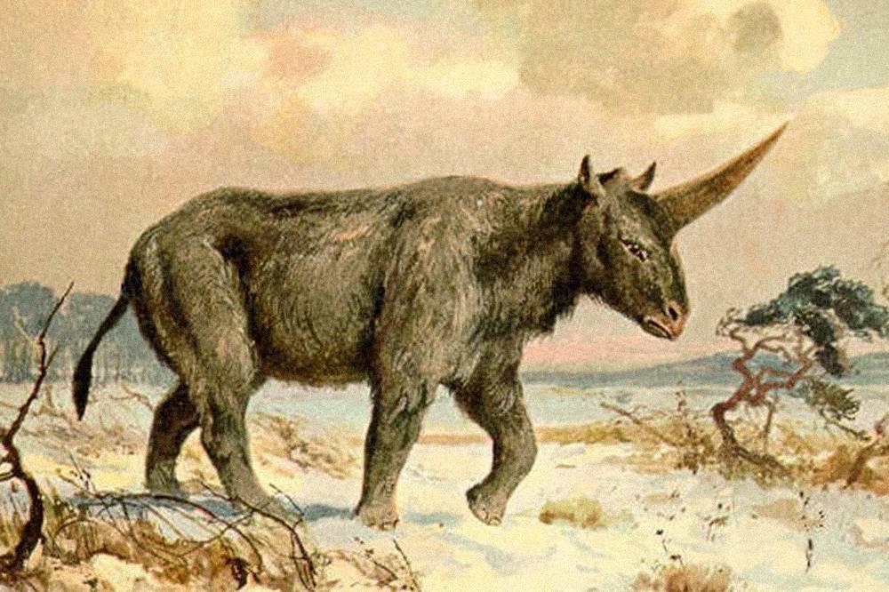 """Cientistas russos encontram restos do """"último dos unicórnios"""""""