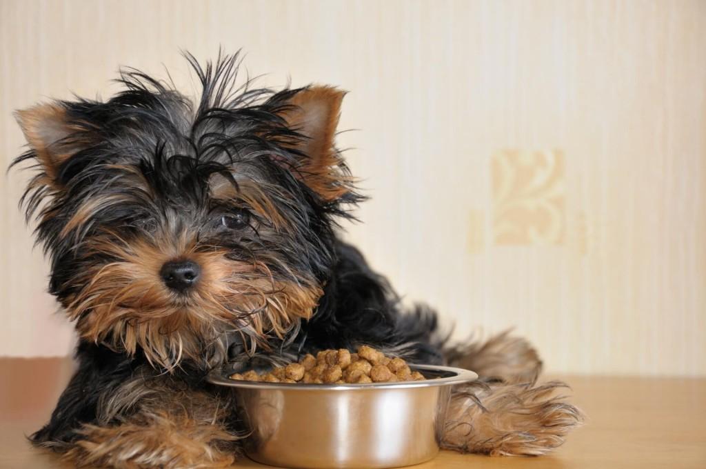 cachorro ao lado do seu prato de ração