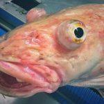 criaturas exóticas do oceano 01