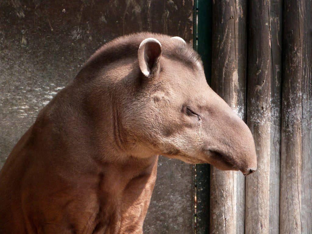 animais do pantanal_1