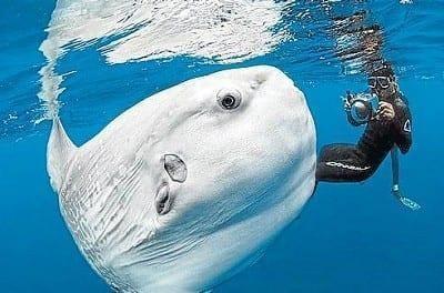 peixe lua   daniel botelho   arquivo 9731242 1549718