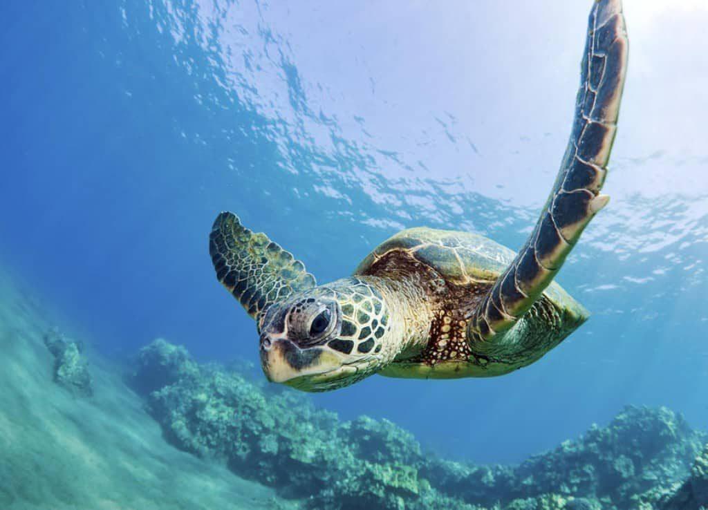 tartaruga marinha 4012570 2987547