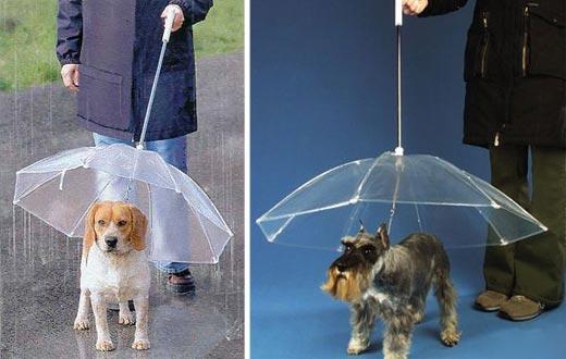 Acessórios para cachorros