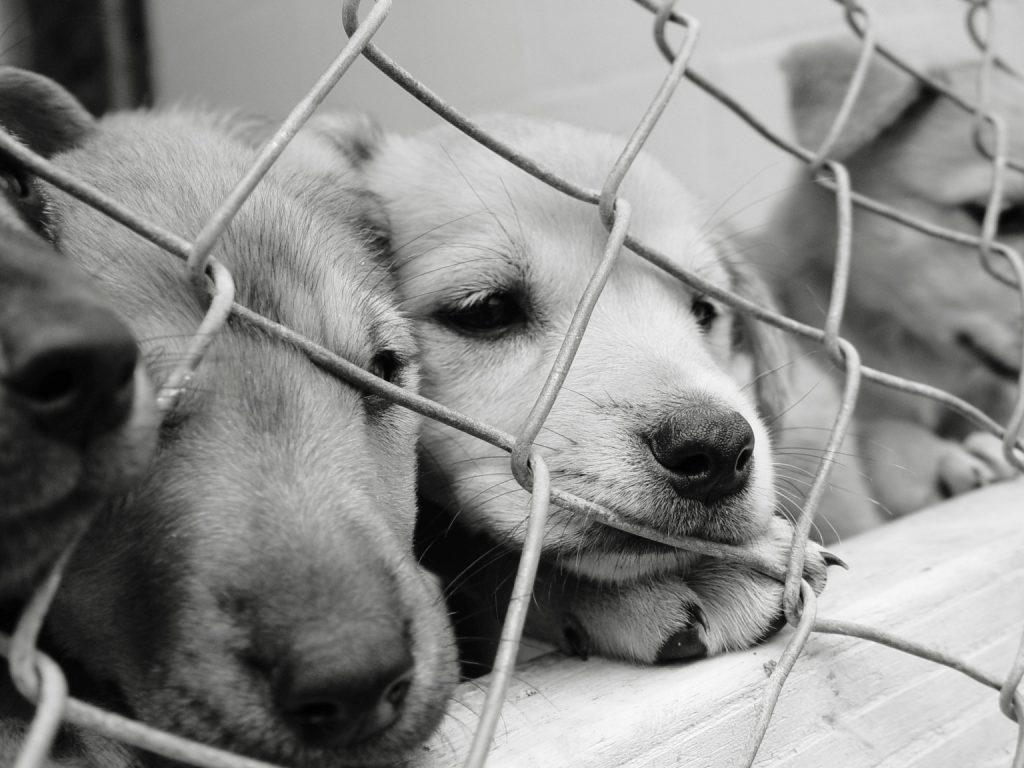 Como adotar um cachorro