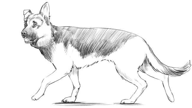 Como desenhar um cachorro