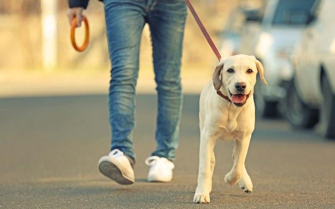 Como fazer coleira para cachorro