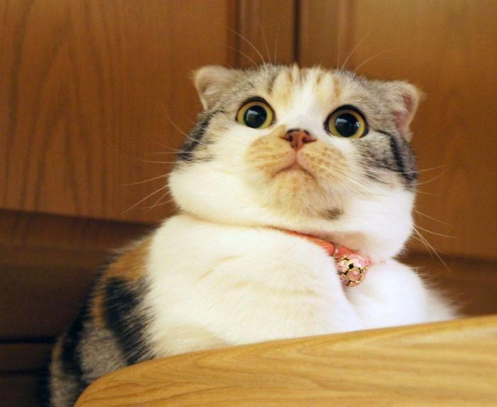 10 cheiros que os gatos detestam