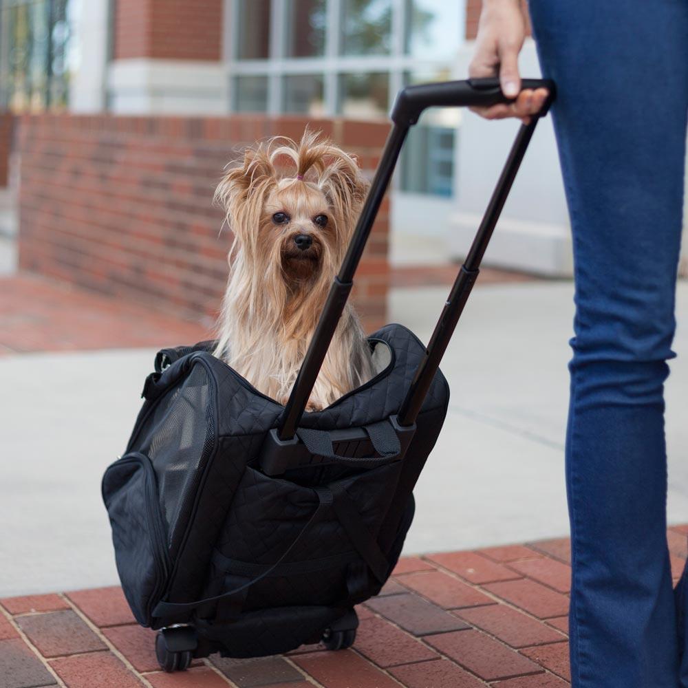 Como transportar cachorro
