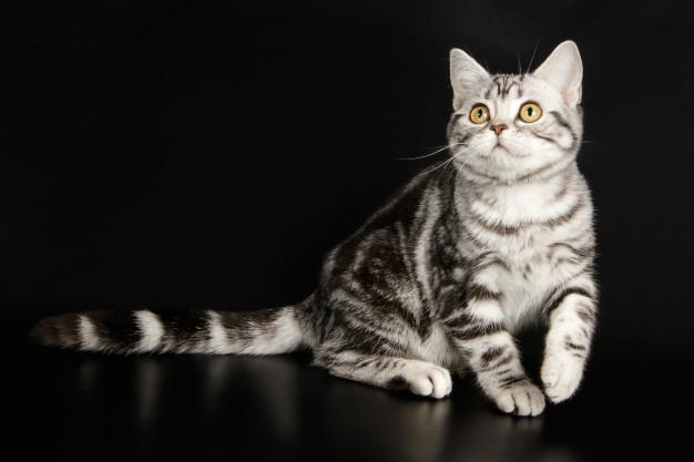 A epilepsia em gatos – entenda como cuidar do seu gato