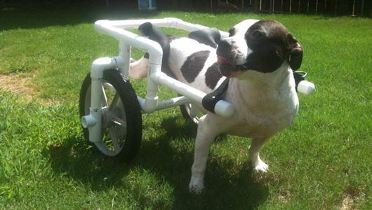 Como fazer cadeira de rodas para cachorro