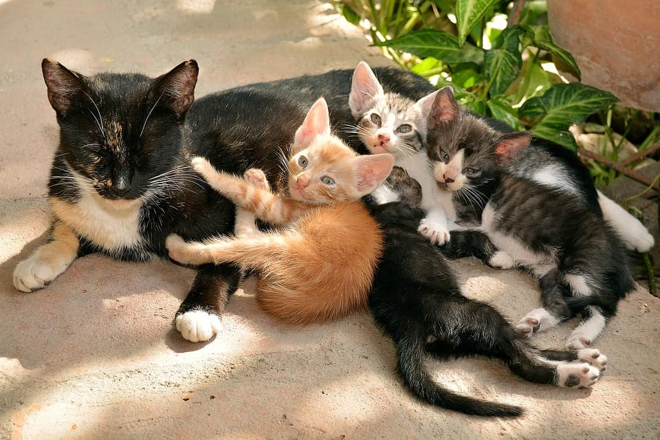 cats-1469477_960_720-8866786-8198865