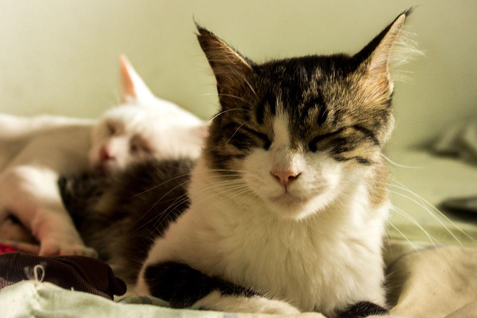 cats-700640_960_720-3820320-8321046