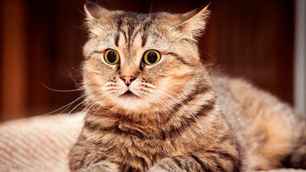 epilepsia em gatos