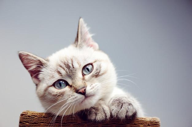 Alergia a gatos – como tratar