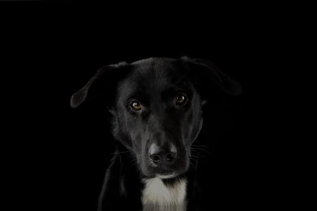 Apito para cachorro